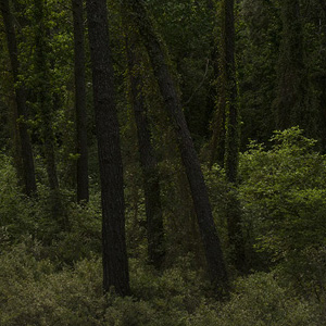 "From the series ""Dear forests, sweet shadows, I come to seek my heart"""
